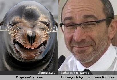 Мэр Харькова и морской котик.