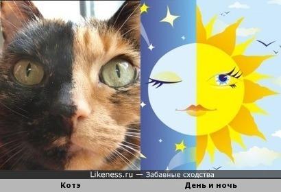 """Котэ напоминает картинку """"День и ночь""""."""
