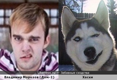 Владимир Морозов (Дом-2) и Хаски.