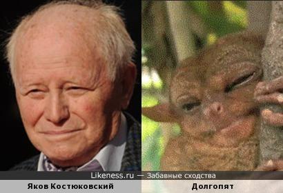 Долгопят похож на Якова Костюковского