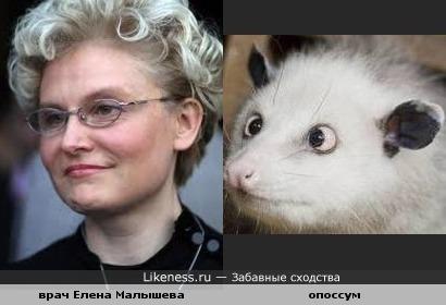 Елена Малышева напоминает этого зверька