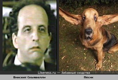 Винсент Скьявелли похож на пёсика породы блудхаунд