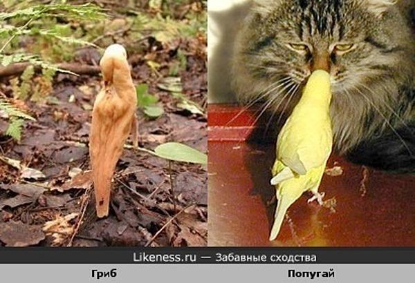 Гриб и попугай