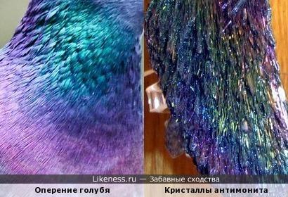 Оперение голубя и кристаллы антимонита