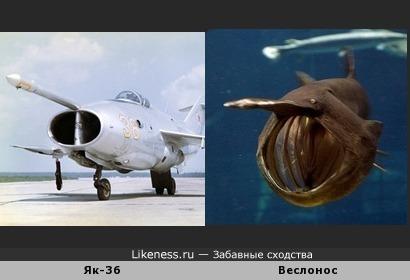 Самолёт Як-36 и рыба веслонос.