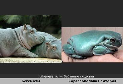 Лягушка и бегемот