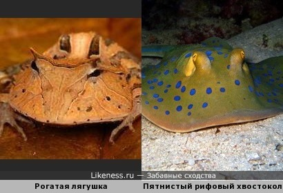 Лягушка и рыба