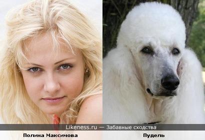 Полина Максимова похожа на Пуделя