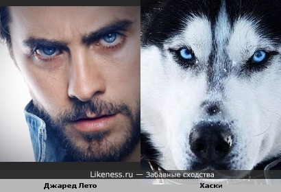 Обожаю глаза Джареда и...Хаски.. что-то есть