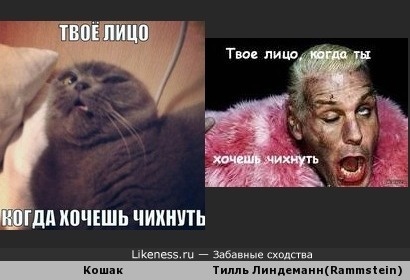Твоё лицо когда хо..АПЧХИ!!!