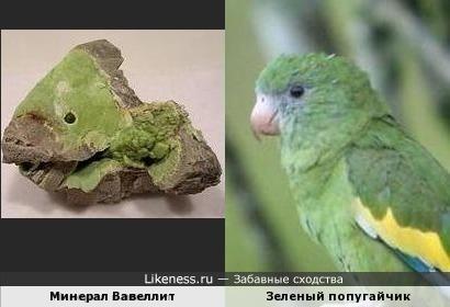 По форме этот камень напоминает мне голову зеленого попугайчика