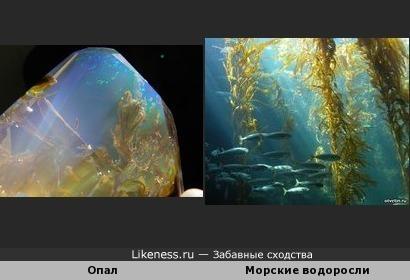 Структура опала похожа на чудесный подводный мир