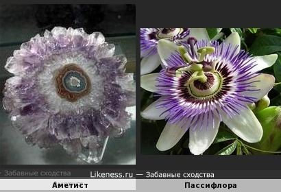 Аметист похож на цветок Пассифлоры (за фото аметиста спасибо Luna)
