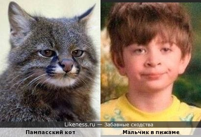 Когда коту сказали что он похож на мальчика в пижаме..