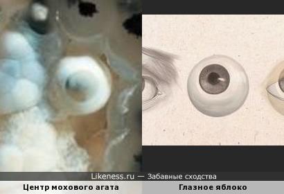 Око мохового глаза следит за вами...