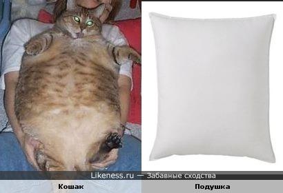Кошак похож на подушку