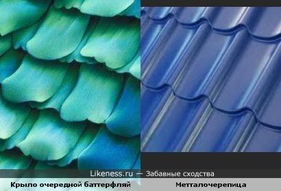 Крыло очередной баттерфляй похоже на металлочерепицу