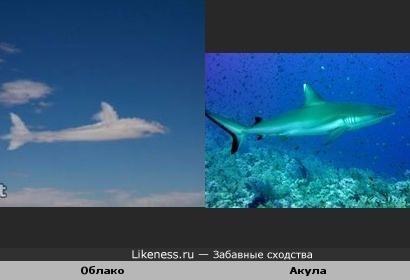 Облако похоже на акулу