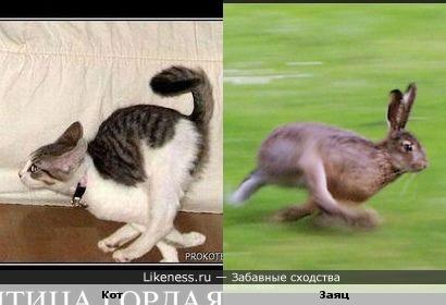 Котозайцев фиг поймаешь))