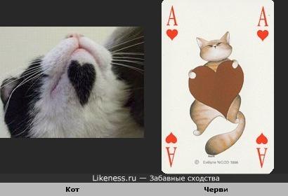 Кот червей