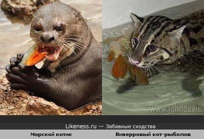 Тс!.. Кошки обедают))