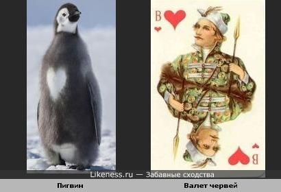 Пингви червей