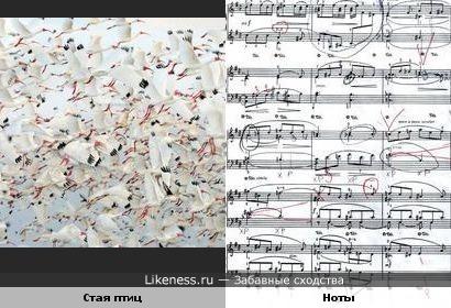 Музыкальные птички