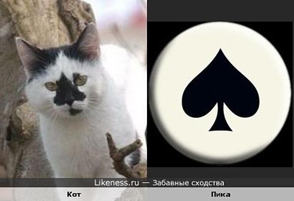 Кот пик