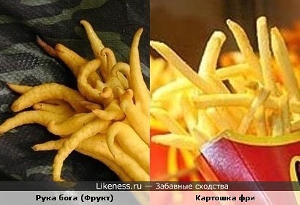 Рука бога (фрукт) напоминает картошку фри