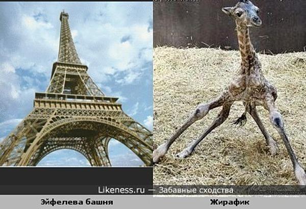 Эйфелева башня похожа на жирафика