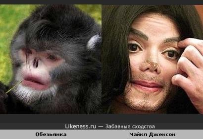 Обезьянка похожа Майкла Джексона