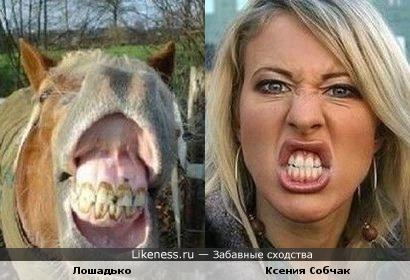 Ксения Собчак похожа на Лошадько