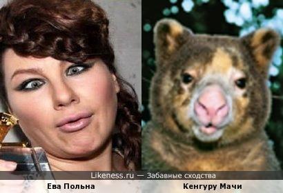 Ну не знаю, но губы у Евы Польны и губы у Кенгуру Мачи точно похожи
