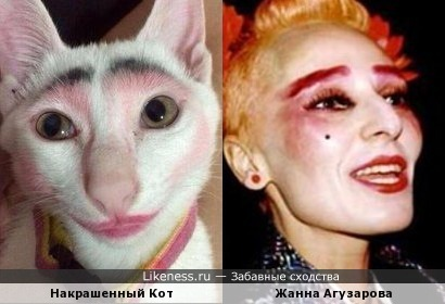 Накрашенный кот пародирует Жанну Агузарову