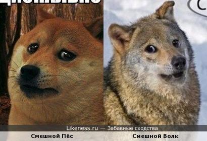 Оказывается волки и собаки похоже даже в приколах