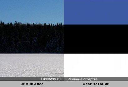 Лес зимой становится похожим на флаг Эстонии