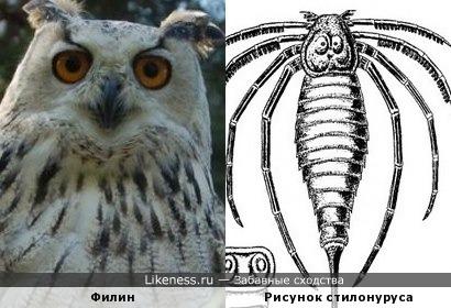 Головогрудь на изображении стилонуруса(вымершего ракоскорпиона) похожа на филина