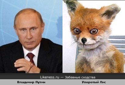 Владиимир Путин похож на Упоротого лиса
