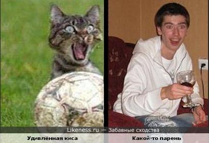 Кошка похожа на парня