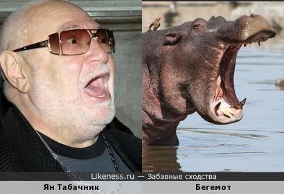 Ян Табачник, бегемот