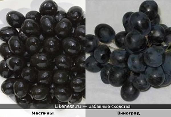 Маслины и виноград похожи