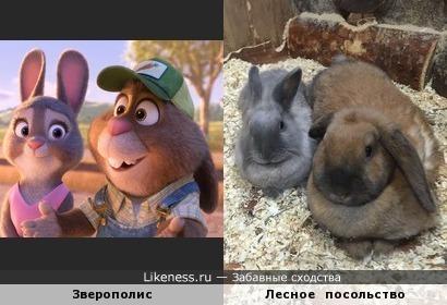 Родители Джуди Хопс в Новосибирском контактном зоопарке