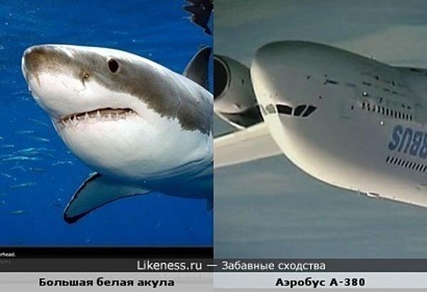 Улыбки акулы и самолёта похожи