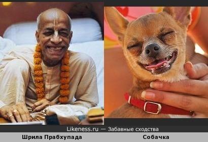 Шрила Прабхупада и гламурная собачка