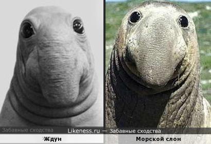 ждун похож на морского слона