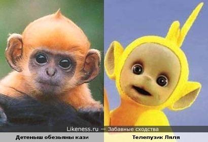 Детеныш обезьяны кази похож на телепузика Лялю