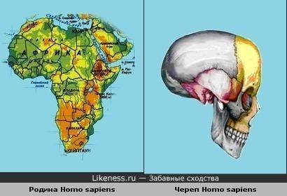 Родина Homo sapiens похожа на череп Homo sapiens