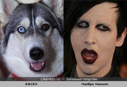 Marilyn Manson похож на хаски