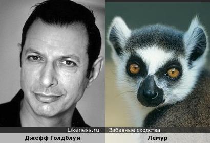 Джефф Голдблум похож на лемура