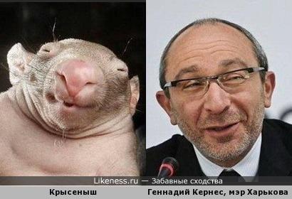 Мэр Харькова Геннадий Кернес и его двойник из мира животных